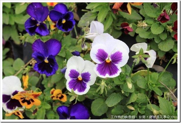 Tainan_Park_flower09