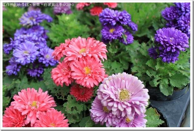 Tainan_Park_flower11