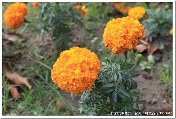 Tainan_Park_flower33