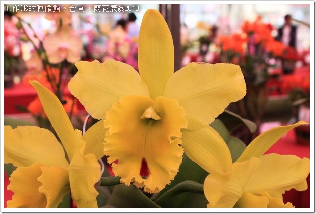 Tainan_orchid23