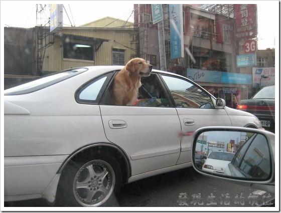 dog_in_car01