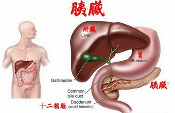 pancreas2s