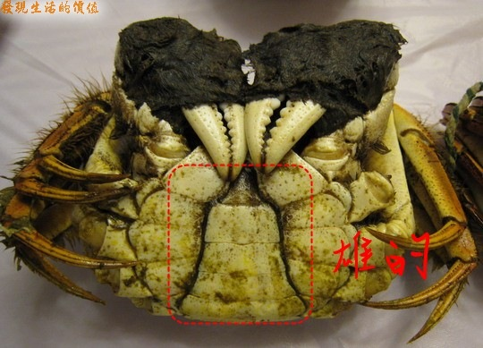 crab_boy
