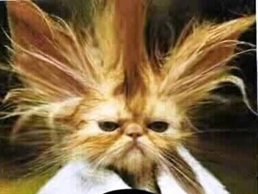 bad_hair