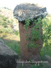 kamennye griby
