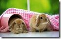 rabbit 22 desktop widescreen wallpaper