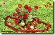christmas roses widescreen wallpaper 1920 x 1200 5 desktop widescreen wallpaper