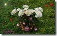 white christmas roses widescreen wallpaper 1920 x 1200 desktop widescreen wallpaper