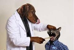 5 DOG DOC