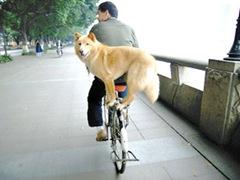 dogonbike2