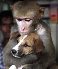 monkey-hugging-dog