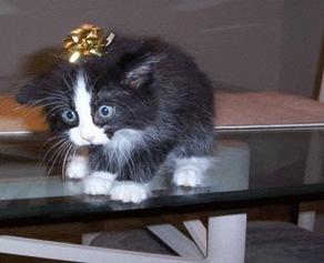 scared-present-cat