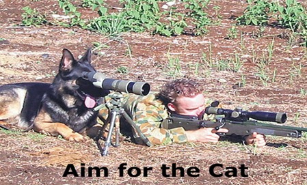 aim-for-the-cat