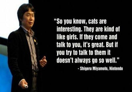 so-you-know-cats-are-interesting