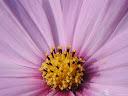 موسوعة رائعة من الورود 9