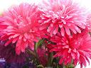 موسوعة رائعة من الورود 11