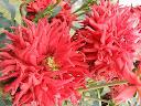 موسوعة رائعة من الورود 12