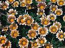موسوعة رائعة من الورود 44