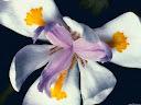 موسوعة رائعة من الورود 45
