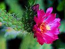 موسوعة رائعة من الورود 47