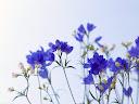 موسوعة رائعة من الورود Flowers-wallpaper%20%2839%29