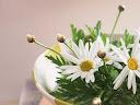 موسوعة رائعة من الورود Flowers-wallpaper%20%287%29