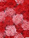 موسوعة رائعة من الورود Pattren%20%2815%29