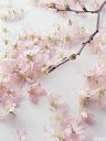 موسوعة رائعة من الورود Pattren%20%2822%29