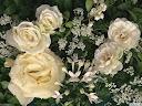 موسوعة رائعة من الورود Pattren%20%2810%29