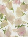 موسوعة رائعة من الورود Pattren%20%281%29