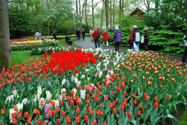 Fiori e Tulipani rossi nel percorso al Keukenhof