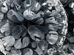 Untitled (Mylar), 2007 (detail)