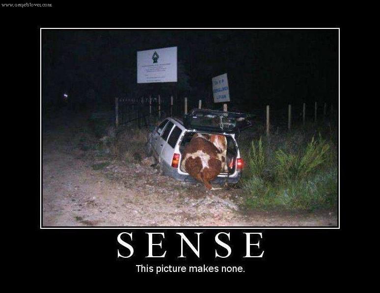 Sense This Picture Mak...