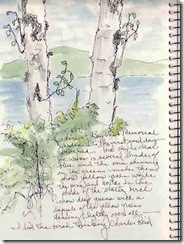 6 17 birch