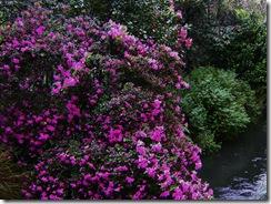 Avon River Flowers