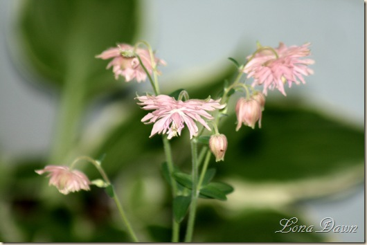 RoseBarlow_Pink