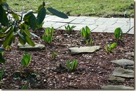 SpringDay_Tulips2