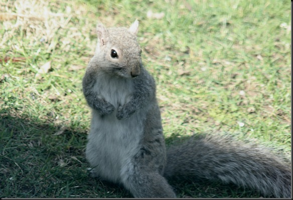 Morning_Squirrel2