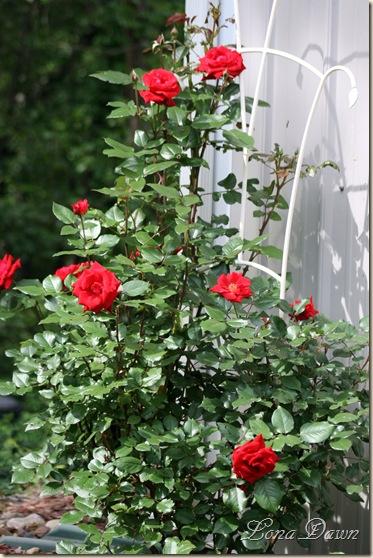CrimsonBouquet_RoseMay20