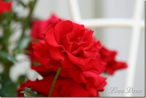 Rose_CrimsonBouquet_Beauty