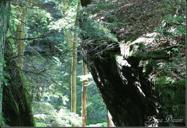 CantwellCliffs_Gorge