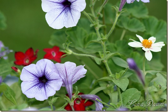 TubFlowers_July5