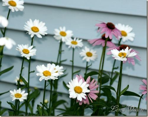 Daisy_Sidebed