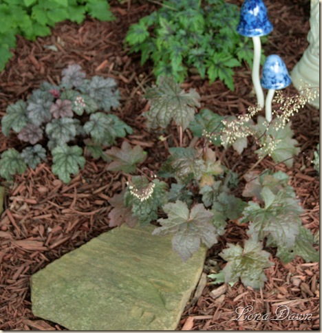 Heuchera_Blooming_July17