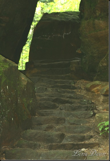 CF_LowerTrail_Steps_May14