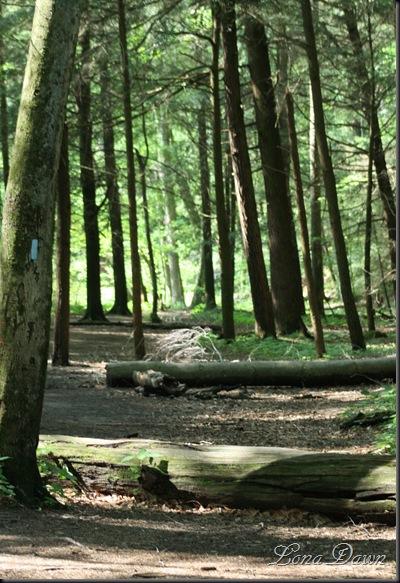 CF_Trail_Halfway_May14