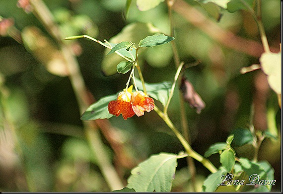 RNP_JewelWeed