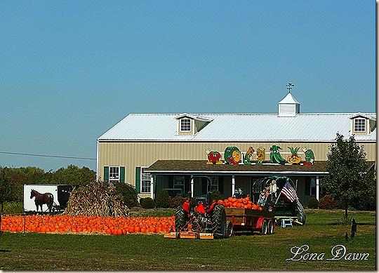 Springboro_Pumpkins
