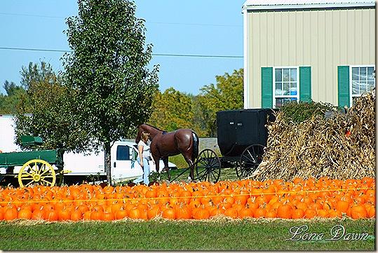Springboro_Pumpkins2