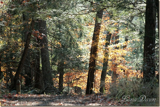 Fall_UpperTrail4